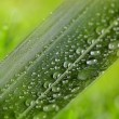 Green leaf with water drops on natural sunny background — Stock Photo