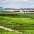 Vineyard landscape, Montagne de Reims, France — Foto de Stock
