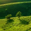 Green meadow and trees — Stock Photo