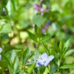 Spring flowers — Stock Photo #3379973