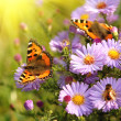 Butterfly on flowers — Stock Photo #34254347