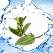 Stock Photo: Green mint with water splash isolated on white