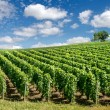 Vineyard landscape, Montagne de Reims, France — Stock Photo #34255053