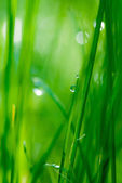 Drop on grass and green background with natural bokeh, soft focu — Stock Photo