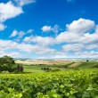 Vineyard landscape, Montagne de Reims, France — Stock Photo #34998127
