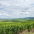 Vineyard landscape, Montagne de Reims, France — Stock Photo