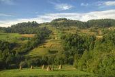 Summer mountains landscape in Carpathians, Ukraine — Stock Photo