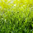 Foto Stock: Green grass background