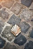 Santiago shell (Pilgrims shell), St James shell in Brussels, Bel — Stock Photo