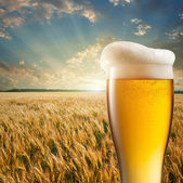Glass of beer against wheat field and sunset — Stok fotoğraf