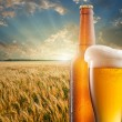 Stock Photo: Glass of beer and bottle against wheat field and sunset
