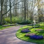 berömda blommor parken keukenhof i Nederländerna också känd som g — Stockfoto #42324929