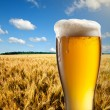 Glass of beer against wheat field and blue sky — Stock Photo