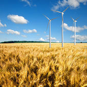 Wind generators turbines on wheat field — Stock Photo