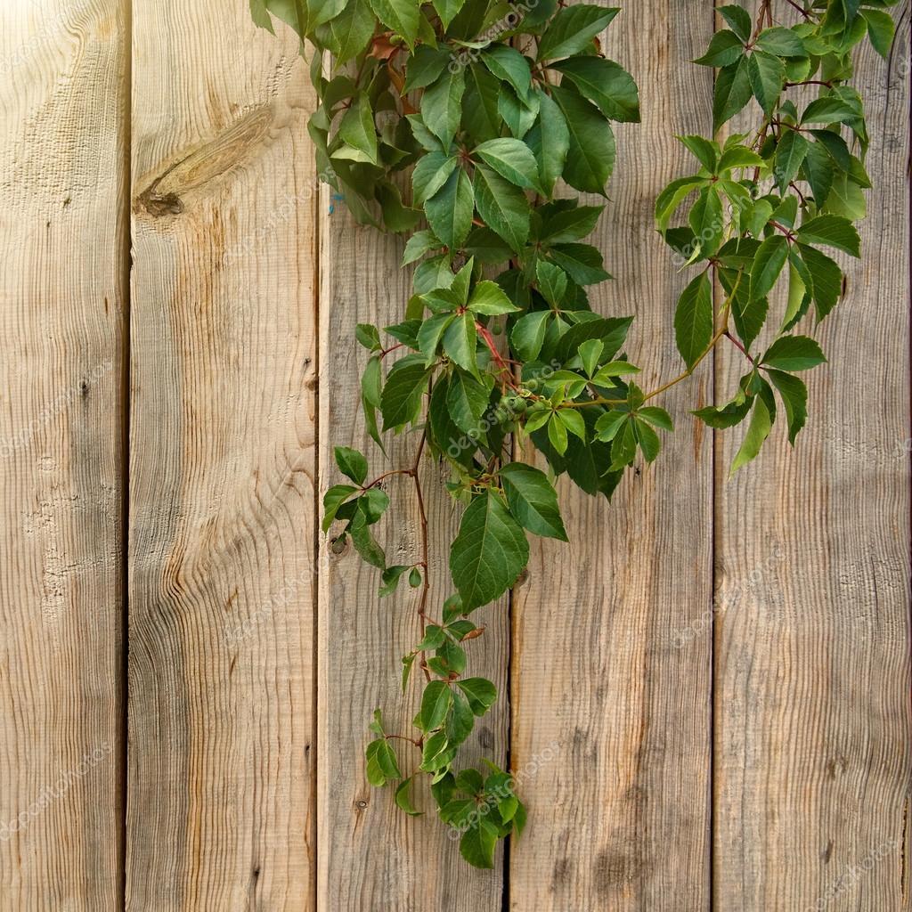 木墙的绿色的树叶
