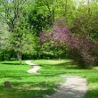 Green park in spring — Stock Photo #44166023