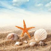 Sea shells on the sand against sky — Stock Photo