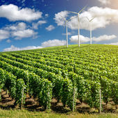Vineyard landscape with wind generators — Stock Photo
