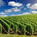 Wind generators turbines on summer landscape — Stock Photo #48103629