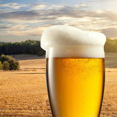 Glass of beer against wheat field — Stock Photo