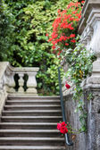 Flowers of Villa Carlotta on Lake Como — Stock Photo