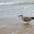 Stock Photo: Seagull goes on coast