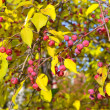 Apple-tree branch with small apples and yellow leaves. autumn pa — Stock Photo #39635837