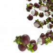 Mangosteen flow with slow motion over white - Stock Photo