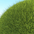 Green planet: close up of fresh grass and blue sky — Stock Photo