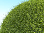 Green planet: close up of fresh grass and blue sky — Stockfoto