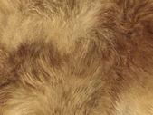 Fashion: fox fell or fur background — Stock Photo