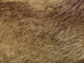Polar Fox fur: brown pattern or background — Stock Photo