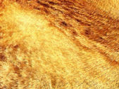 Yellow and brown fox fur pattern or background — Stock Photo