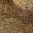 Stock Photo: Fox fur or fell: brown pattern or background
