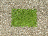 Environment: gravel frame and green grass patch — Stock Photo