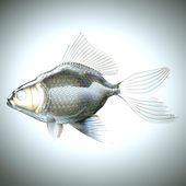 Side view of fish made of glass — Stock Photo