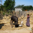 Nepal farm life — Stock Photo #12379934