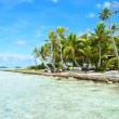 Coconut palms on a pacific island — Stock Photo