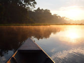 Amazon rainforest sunrise by boat — Stock Photo