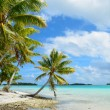 Foto Stock: Tropical palm beach