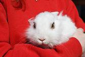 White rabbit — Stock Photo