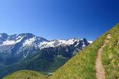 Alp patika — Stok fotoğraf
