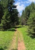 Alpine path — Stock Photo