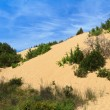 Stock Photo: Piscinas dunes, Sardinia, Italy
