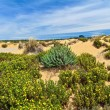 Sardinia - flowered dune in Piscinas — Stock Photo