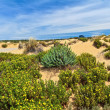 Sardinia - flowered dune in Piscinas — Stock Photo #27701225