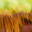 Stock Photo: Mane of horse