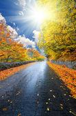 Jesień las drogi — Zdjęcie stockowe