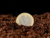 Euro money growing in the ground — Stock Photo
