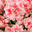 Flower background — Stock Photo #16268915